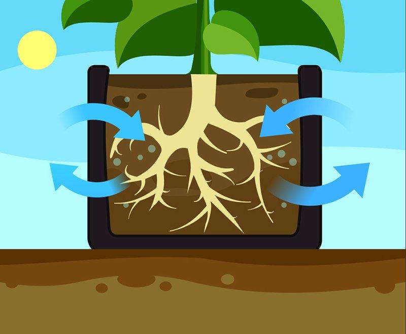 bagpot soil respiration.jpg