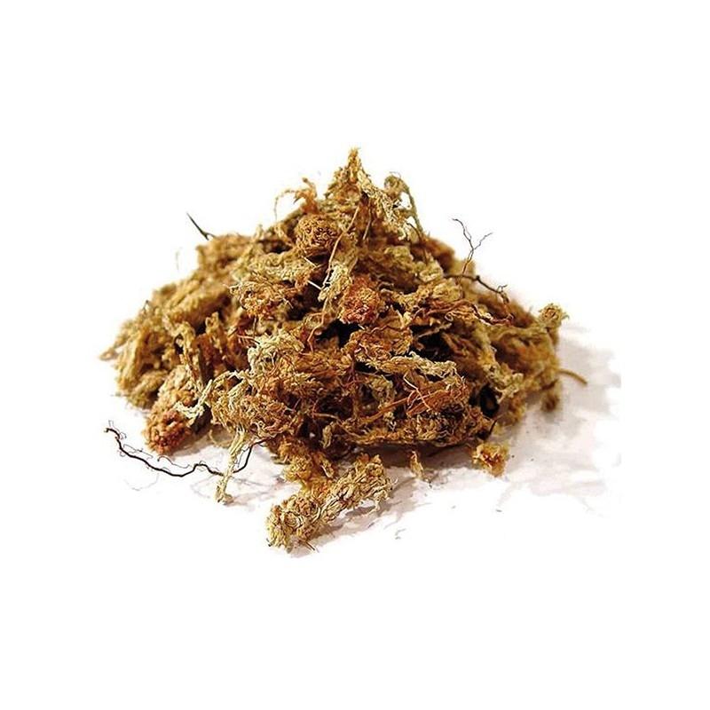 Sphaigne du Chili 250 gr Qualité Premium (Garden Solution)