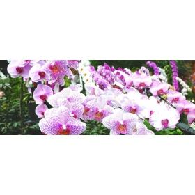 Substrat Orchidée 10ltr