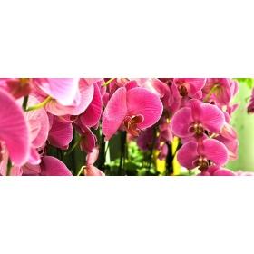 Soucoupe pour Pot Orchidée 17 cm Orchid Focus